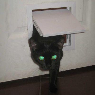Люк для кошек своими руками