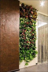 Вертикальное озеленение в дизайне.