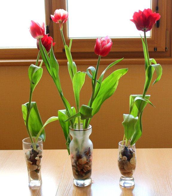 Тюльпаны в доме