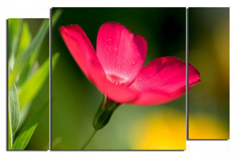 красный цветок1
