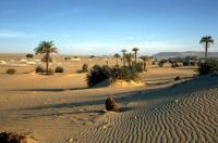 sahara_oase_1832806_property_zoom - Размер 37,46К, Загружен: 413