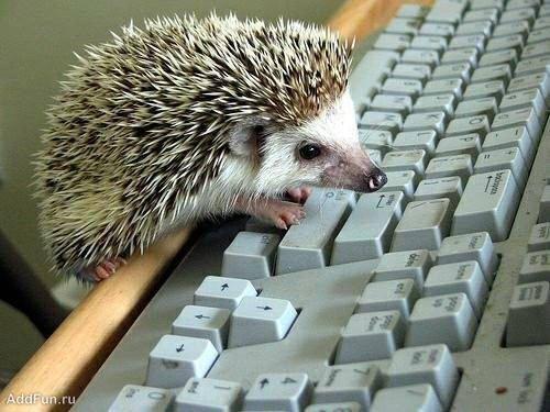 funny_hedgehogs_51.jpg