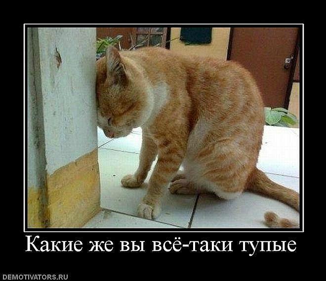 ext_604c358be6eaef4023207dda042a44f9.jpg