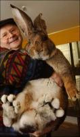 bunny - Размер 36,59К, Загружен: 48