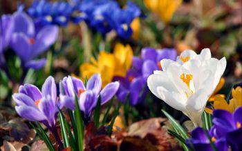 весенние-цветы - Размер 104,09К, Загружен: 0