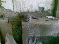 cat - Размер 63,64К, Загружен: 614