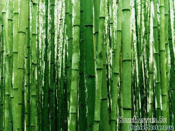 bambukovye-oboi.jpg