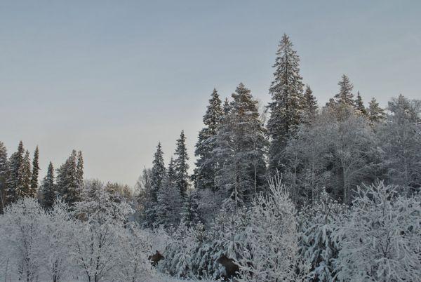 6) декабрь 2012 (117) - Размер 404,26К, Загружен: 0