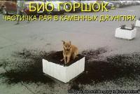 becti_net_r154480d11t33304n6 - Размер 62,38К, Загружен: 138