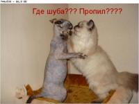 post-16515-1245267644_thumb.jpg
