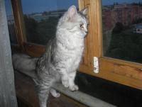 кошка2 - Размер 47,85К, Загружен: 536