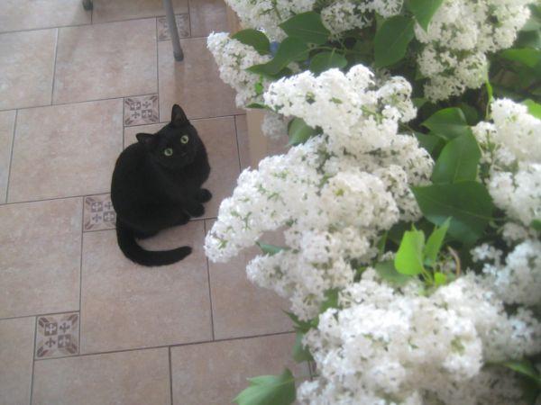 cat1 - Размер 173,34К, Загружен: 65