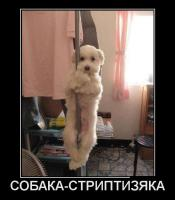 post-15106-1342511991_thumb.jpg