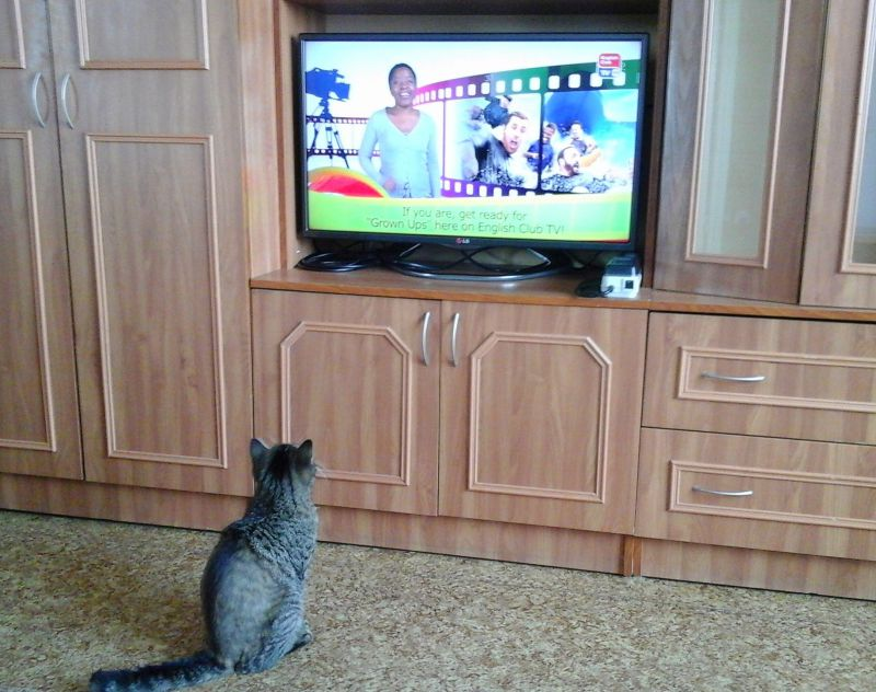 Когда британская кошка учит английский - Размер 778,14К, Загружен: 36