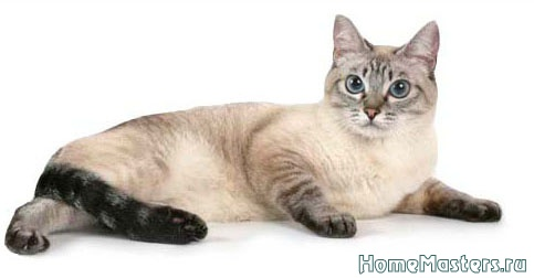 thai-cat - Размер 31,61К, Загружен: 14