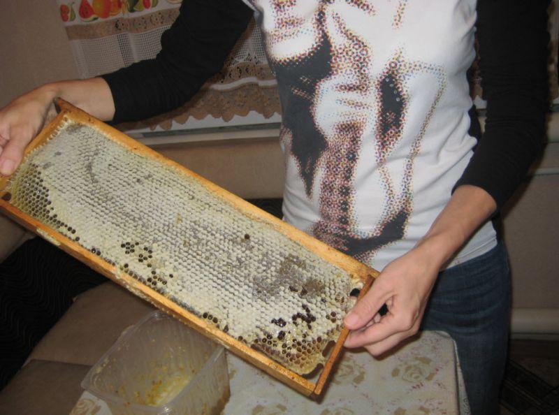 Мёд в сотах - Размер 168,13К, Загружен: 0
