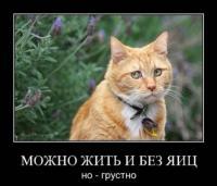 post-9894-1312898001_thumb.jpg