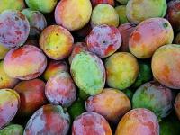 mango - Размер 51,52К, Загружен: 371