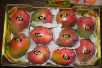 mango_export_01 - Размер 32,15К, Загружен: 413