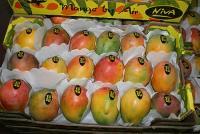 mango_export_02 - Размер 30,65К, Загружен: 479