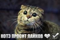 post-73269-1355501532_thumb.jpg