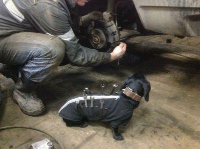 1449814678_auto_repair_worker_02 - Размер 84,14К, Загружен: 203