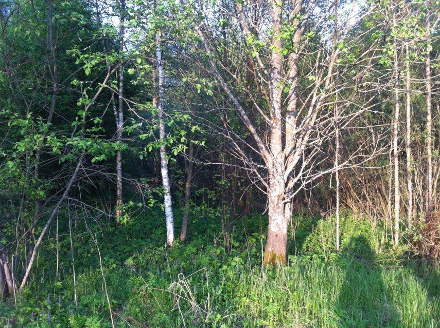 дача в лесу3.JPG
