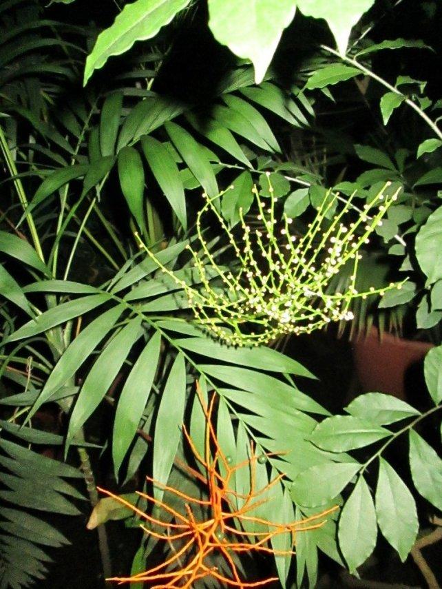 flora_10.thumb.jpg.80611d4872dd66f1398ef222e73c74f5.jpg