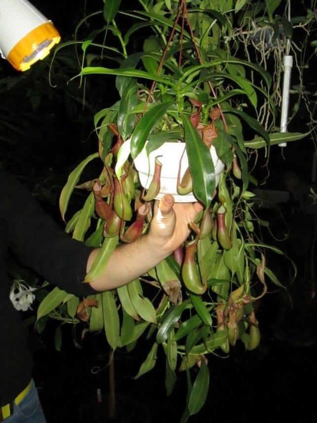 flora_12.thumb.jpg.c7015d654108a0d340ae4ee82a68b8e6.jpg