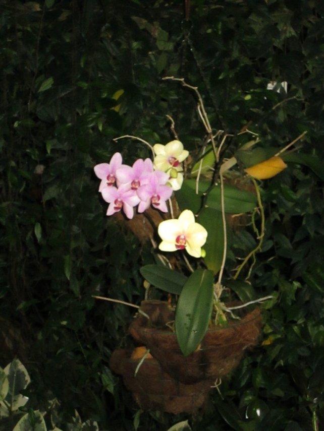 flora_20.thumb.jpg.2ae9c3b4d02366779813769f81f8cf46.jpg